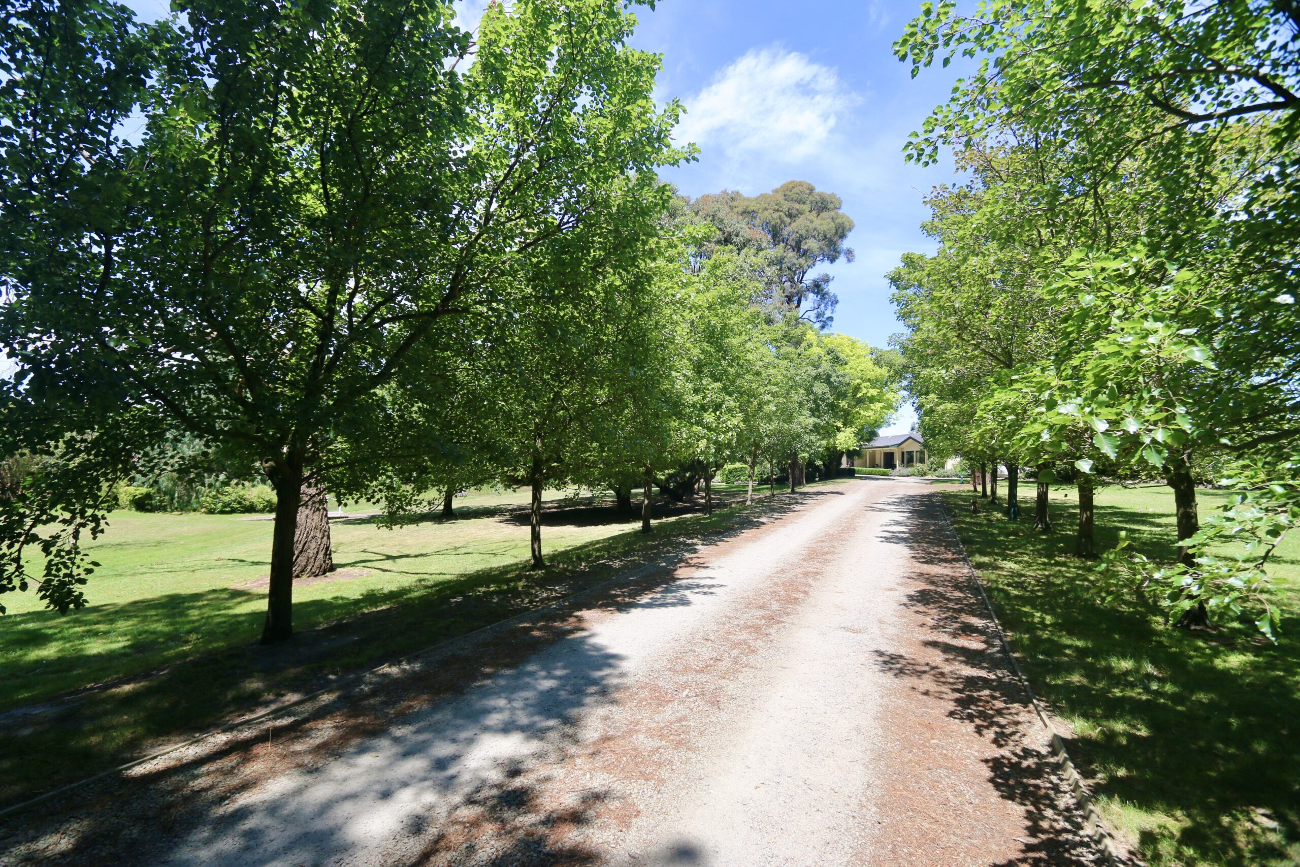 Sweeping driveway with avenue of trees . Moorooduc holiday rental